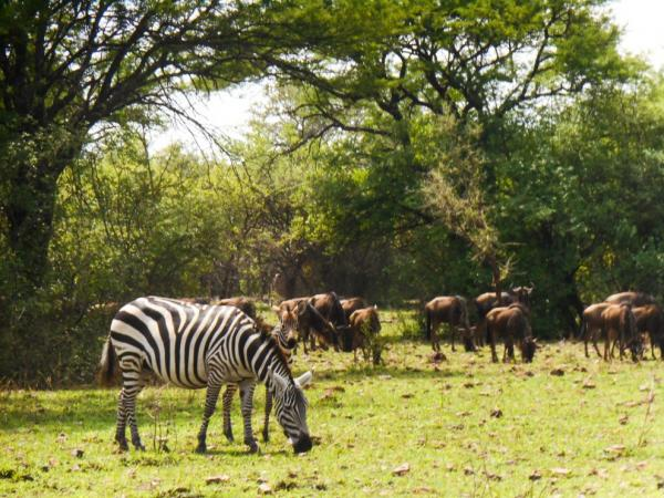 Lots of other animals can be seen in the Serengeti