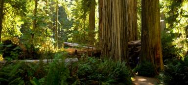 A trip to Redwood National Park