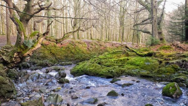 Tollymore forest park