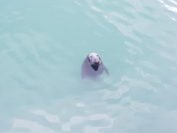 Encounter with a seal