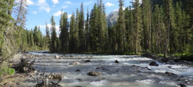 Wandering through the wilderness of the Russian Altai