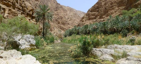 Hike into the interior of the Wadi Ash Shab gorge