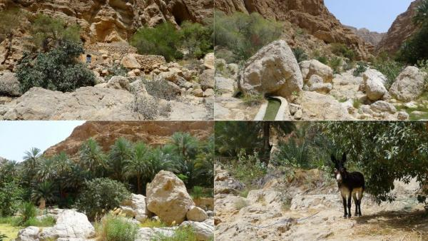An oasis in Wadi Ash Shab