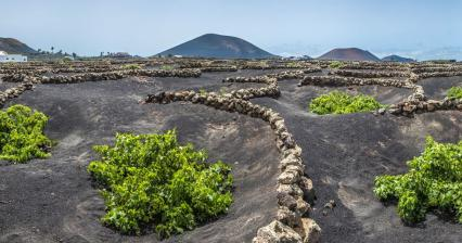 Lanzarote and wine