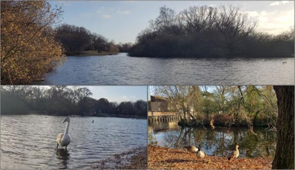 Epping forest park