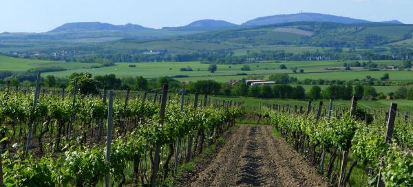 The most beautiful trips in South Moravia
