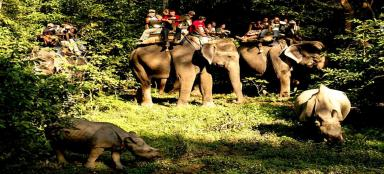 Chitwan National Park-Things To Do