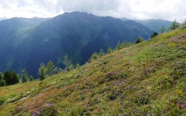 Blooming mountain slopes